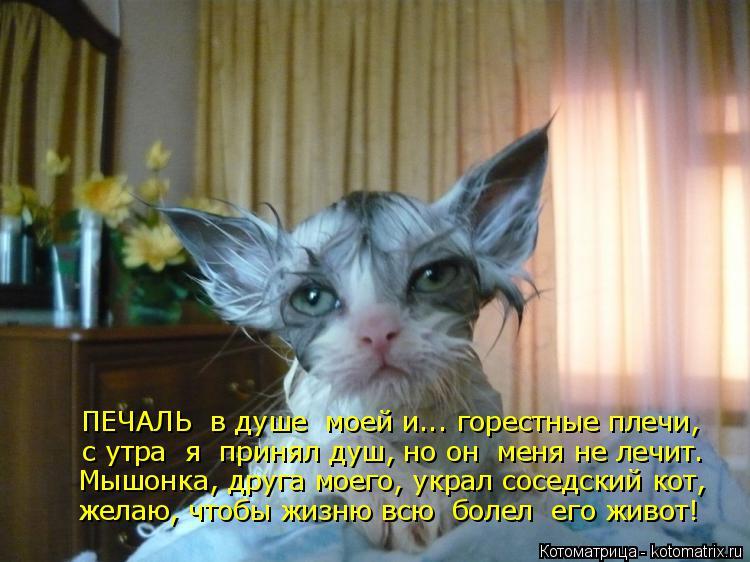 Котоматрица: ПЕЧАЛЬ  в душе  моей и... горестные плечи, с утра  я  принял душ, но он  меня не лечит. Мышонка, друга моего, украл соседский кот, желаю, чтобы жиз