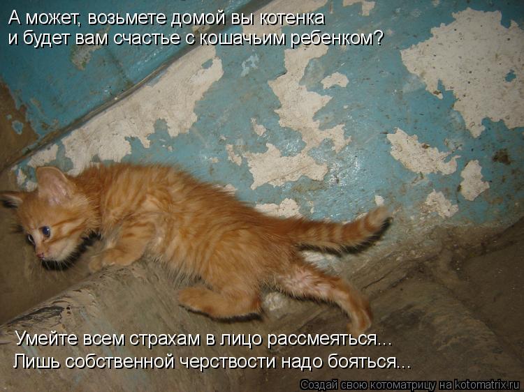 Котоматрица: А может, возьмете домой вы котенка  и будет вам счастье с кошачьим ребенком? Умейте всем страхам в лицо рассмеяться... Лишь собственной черст