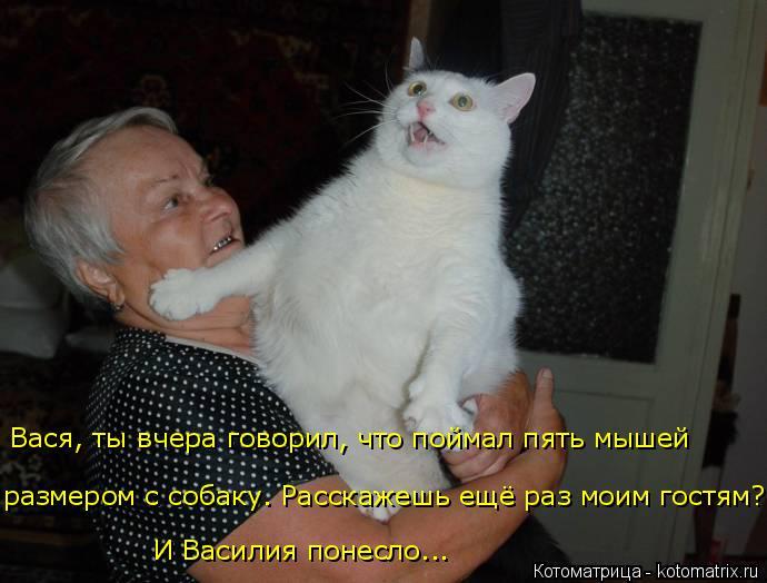 Котоматрица: размером с собаку. Расскажешь ещё раз моим гостям? И Василия понесло... Вася, ты вчера говорил, что поймал пять мышей
