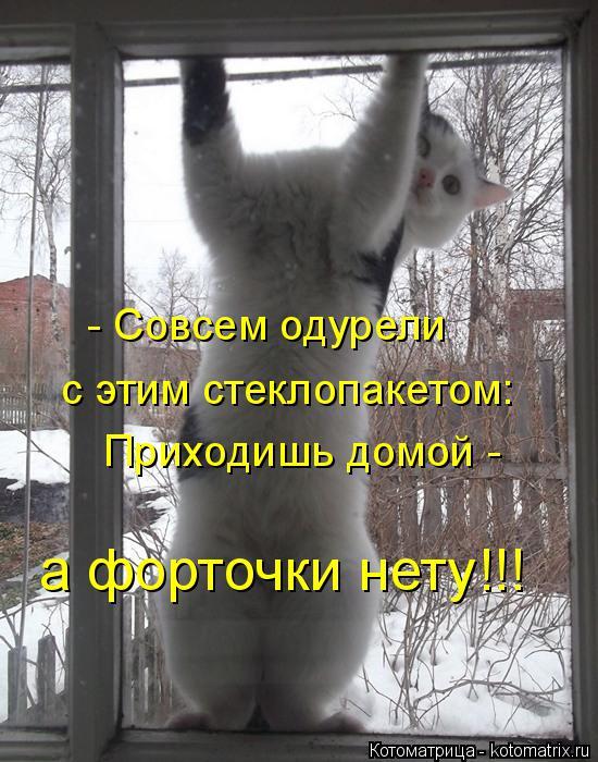 Котоматрица: - Совсем одурели   с этим стеклопакетом: Приходишь домой - а форточки нету!!!