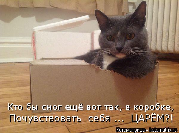 Котоматрица: Кто бы смог ещё вот так, в коробке,  Почувствовать  себя ...  ЦАРЁМ?!