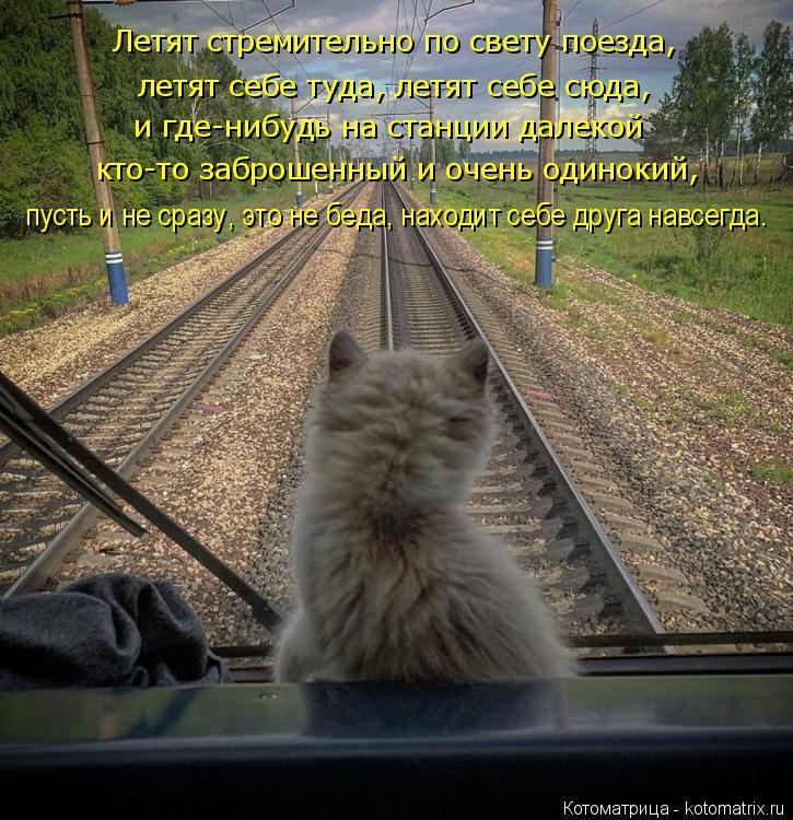 Котоматрица: летят себе туда, летят себе сюда, Летят стремительно по свету поезда, и где-нибудь на станции далекой кто-то заброшенный и очень одинокий, пу