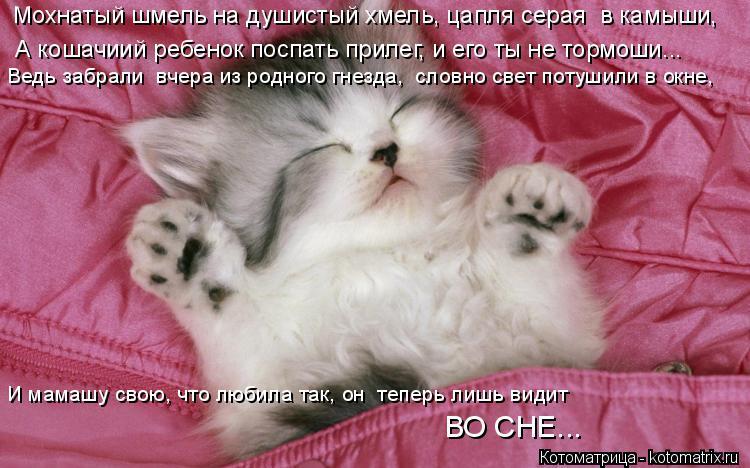 Котоматрица: Мохнатый шмель на душистый хмель, цапля серая  в камыши,  А кошачиий ребенок поспать прилег, и его ты не тормоши... Ведь забрали  вчера из родн