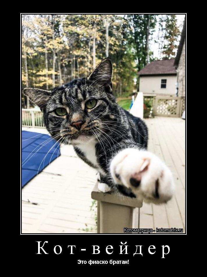Котоматрица: Кот-вейдер Это фиаско братан!