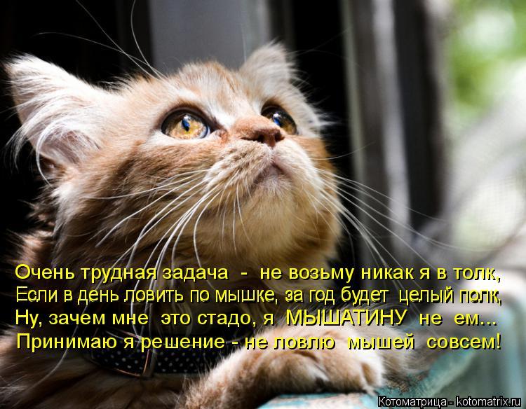 Котоматрица: Очень трудная задача  -  не возьму никак я в толк, Если в день ловить по мышке, за год будет  целый полк, Если в день ловить по мышке, за год буде