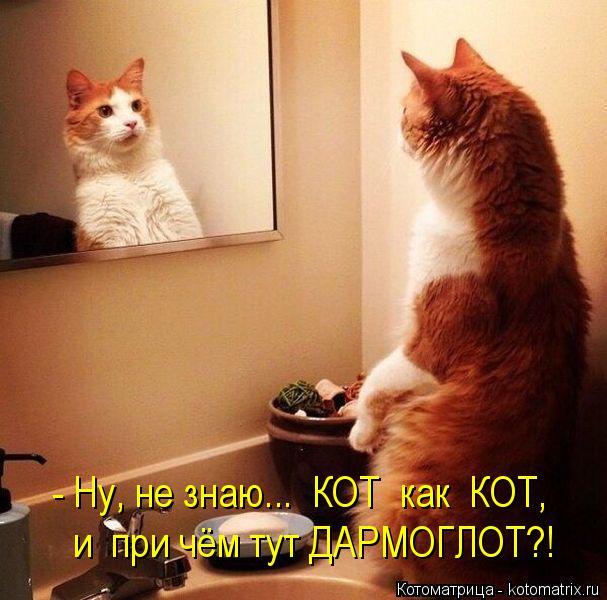 Котоматрица: - Ну, не знаю...  КОТ  как  КОТ, и  при чём тут ДАРМОГЛОТ?!