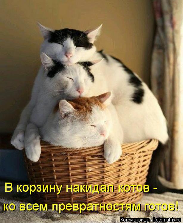 Котоматрица: В корзину накидал котов -  ко всем превратностям готов!