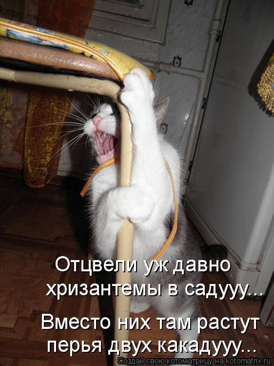 Котоматрица: Отцвели уж давно  хризантемы в садууу... Вместо них там растут перья двух какадууу...