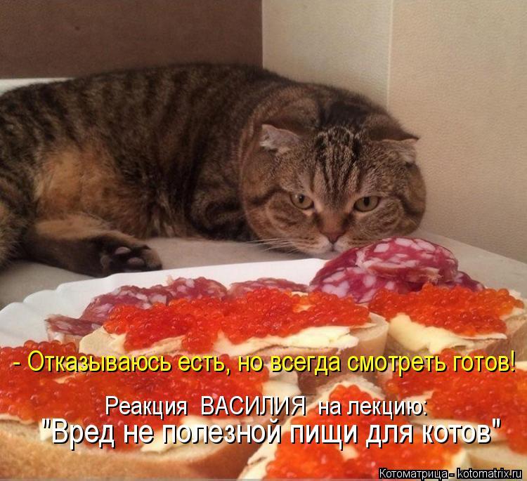 """Котоматрица: - Отказываюсь есть, но всегда смотреть готов! Реакция  ВАСИЛИЯ  на лекцию: """"Вред не полезной пищи для котов"""""""