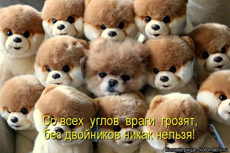 Котоматрица: Со всех  углов  враги  грозят, без двойников никак нельзя!