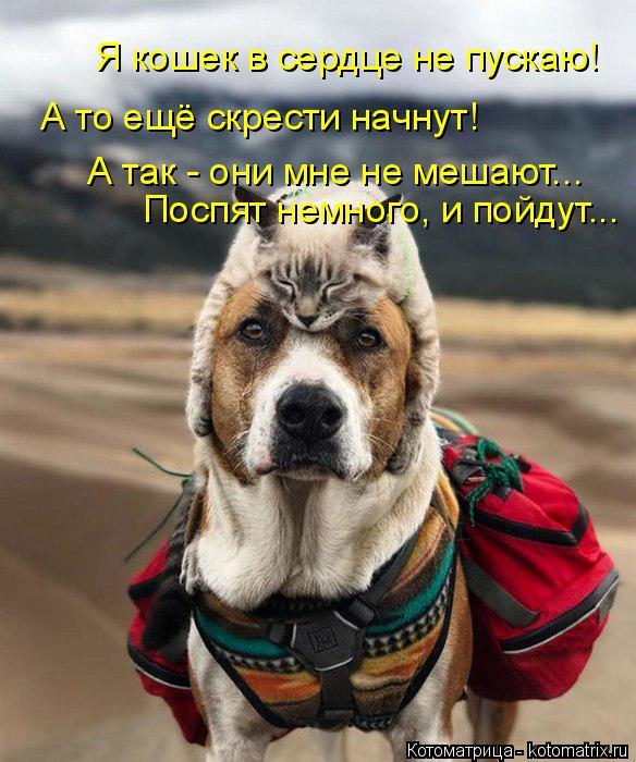Котоматрица: Я кошек в сердце не пускаю! А то ещё скрести начнут! А так - они мне не мешают... Поспят немного, и пойдут...