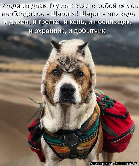 Котоматрица: Уходя из дома Мурзик взял с собой самое необходимое - Шарика! Шарик - это ведь  и диван, и грелка, и конь, и носильщик,  и охранник, и добытчик.