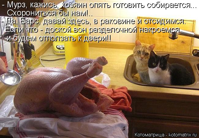 Котоматрица: - Мурз, кажись, хозяин опять готовить собирается... Схорониться бы нам!..  - Да, Барс, давай здесь, в раковине и отсидимся. Если что - доской вон р?