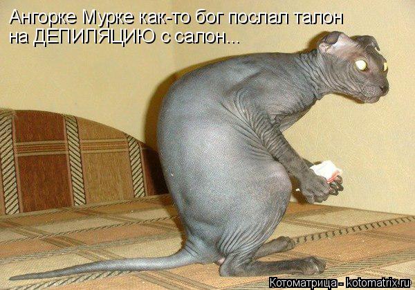 Котоматрица: Ангорке Мурке как-то бог послал талон  на ДЕПИЛЯЦИЮ с салон...