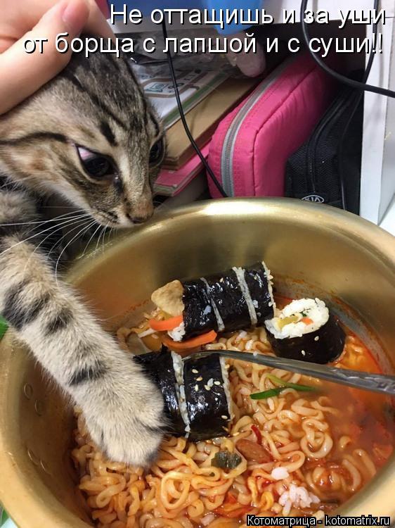Котоматрица: Не оттащишь и за уши от борща с лапшой и с суши!!