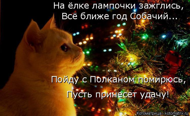 Котоматрица: На ёлке лампочки зажглись,  Всё ближе год Собачий... Пойду с Полканом помирюсь,  Пусть принесет удачу!
