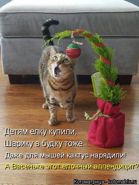 Котоматрица: Детям елку купили,   Шарику в будку тоже. Даже для мышей кактус нарядили! А Васеньке этот елочный аппендицит?