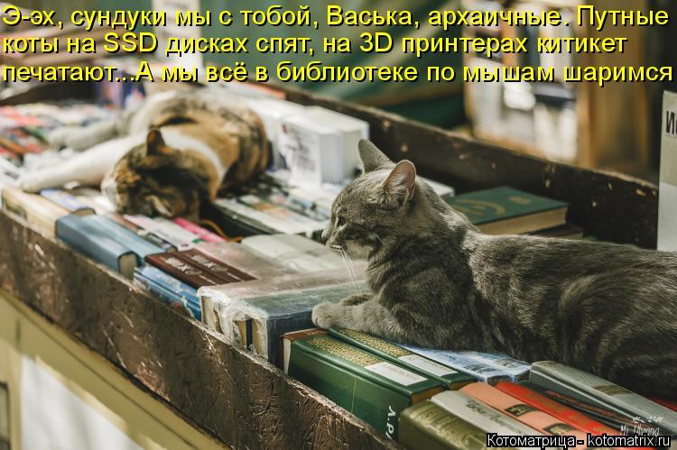Котоматрица: Э-эх, сундуки мы с тобой, Васька, архаичные. Путные коты на SSD дисках спят, на 3D принтерах китикет печатают...А мы всё в библиотеке по мышам шар?