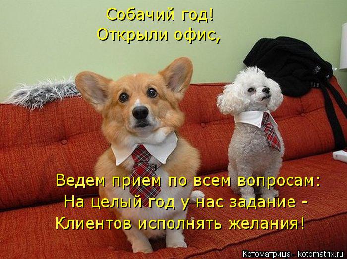 Котоматрица: Собачий год! Открыли офис,  Ведем прием по всем вопросам: На целый год у нас задание - Клиентов исполнять желания!