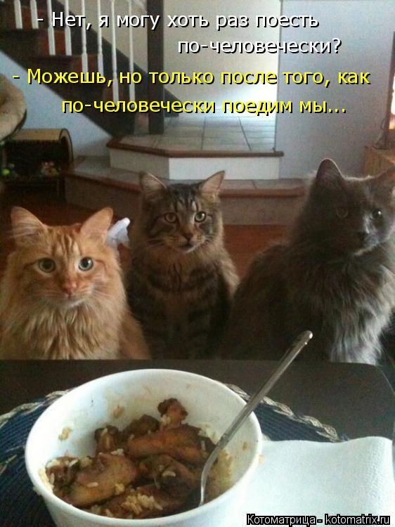 Котоматрица: - Нет, я могу хоть раз поесть по-человечески? - Можешь, но только после того, как по-человечески поедим мы...