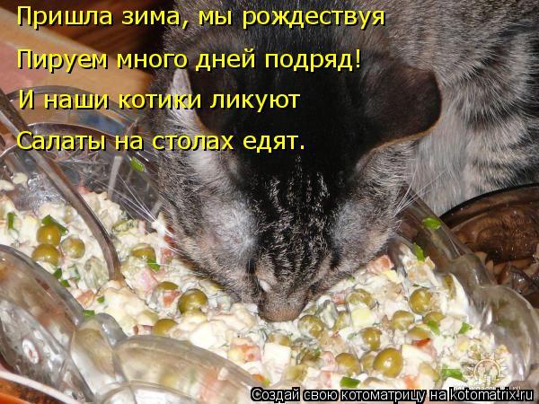 Котоматрица: Пируем много дней подряд! Пришла зима, мы рождествуя И наши котики ликуют Салаты на столах едят.