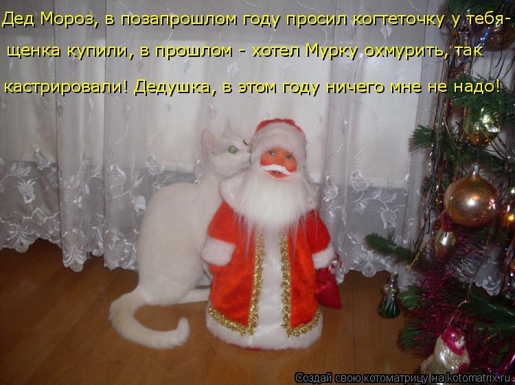 Котоматрица: кастрировали! Дедушка, в этом году ничего мне не надо! щенка купили, в прошлом - хотел Мурку охмурить, так Дед Мороз, в позапрошлом году проси?