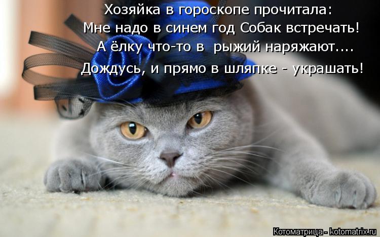 Котоматрица: Хозяйка в гороскопе прочитала: Мне надо в синем год Собак встречать! А ёлку что-то в  рыжий наряжают.... Дождусь, и прямо в шляпке - украшать!