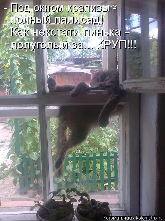 Котоматрица: - Под окном крапивы -  полный палисад! Как некстати линька -  полуголый за... КРУП!!!