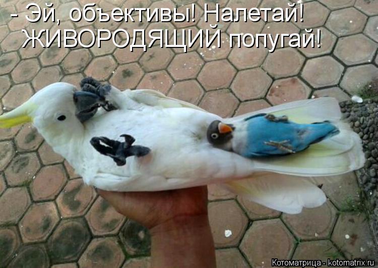 Котоматрица: - Эй, объективы! Налетай! ЖИВОРОДЯЩИЙ попугай!