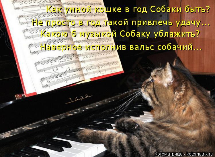 Котоматрица: Как умной кошке в год Собаки быть? Не просто в год такой привлечь удачу... Какою б музыкой Собаку ублажить? Наверное исполнив вальс собачий...