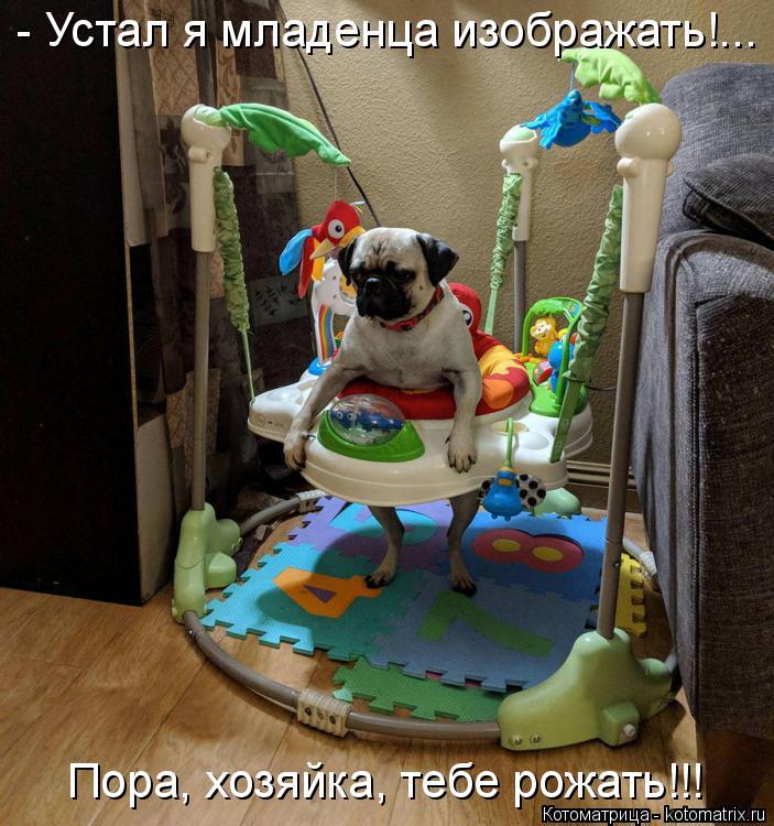 Котоматрица: - Устал я младенца изображать!... Пора, хозяйка, тебе рожать!!!