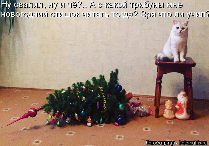 Котоматрица: Ну свалил, ну и чё?.. А с какой трибуны мне новогодний стишок читать тогда? Зря что ли учил?