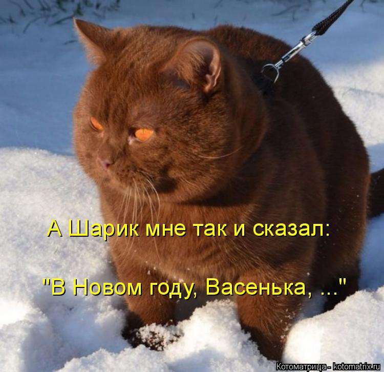"""Котоматрица: А Шарик мне так и сказал: """"В Новом году, Васенька, ..."""""""
