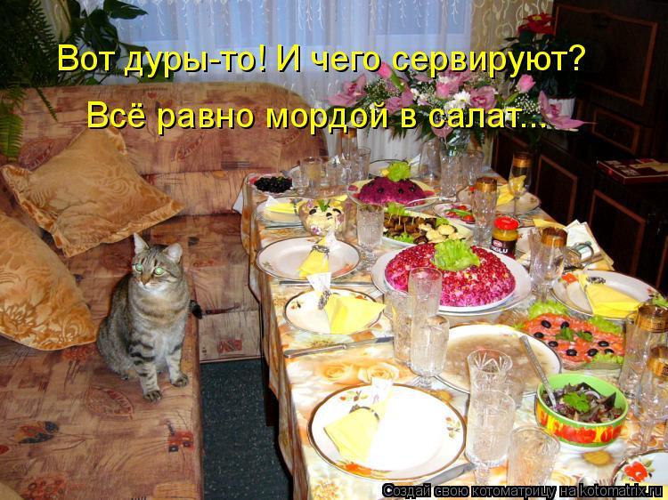 Котоматрица: Вот дуры-то! И чего сервируют? Всё равно мордой в салат...
