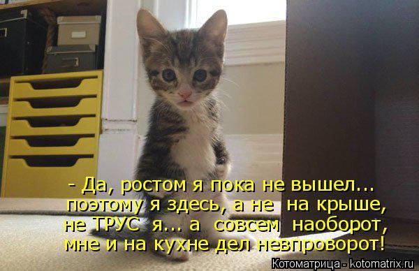 Котоматрица: - Да, ростом я пока не вышел... поэтому я здесь, а не  на крыше, не ТРУС  я... а  совсем  наоборот, мне и на кухне дел невпроворот!