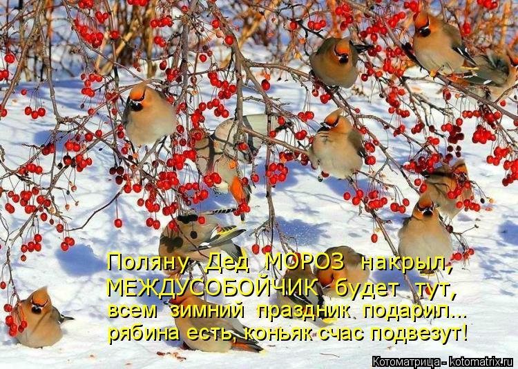 Котоматрица: Поляну  Дед  МОРОЗ  накрыл, всем  зимний  праздник  подарил... рябина есть, коньяк счас подвезут! МЕЖДУСОБОЙЧИК  будет  тут,