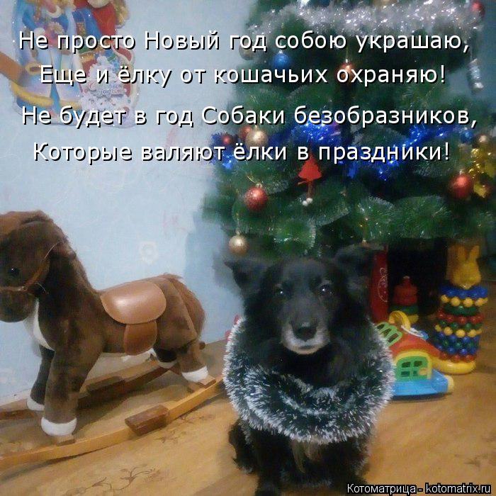 Котоматрица: Не просто Новый год собою украшаю, Еще и ёлку от кошачьих охраняю! Не будет в год Собаки безобразников, Которые валяют ёлки в праздники!