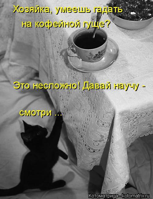 Котоматрица: Хозяйка, умеешь гадать на кофейной гуще? Это несложно! Давай научу -  смотри ...