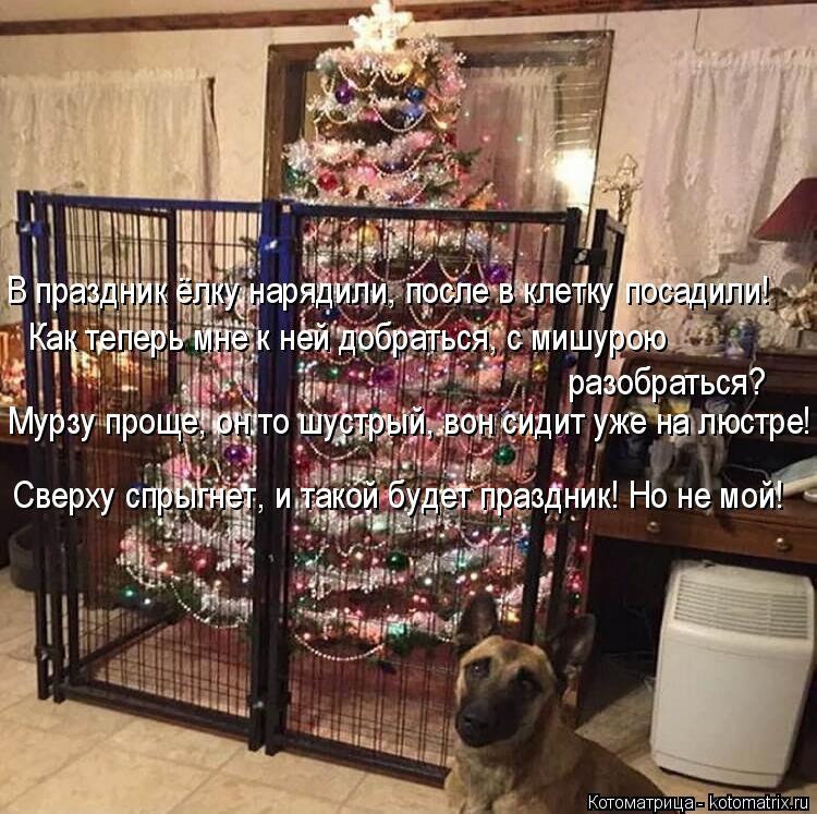 Котоматрица: В праздник ёлку нарядили, после в клетку посадили! Как теперь мне к ней добраться, с мишурою  разобраться? Мурзу проще, он то шустрый, вон сид?