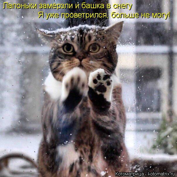 Котоматрица: Лапоньки замёрзли и башка в снегу  Я уже проветрился, больше не могу!