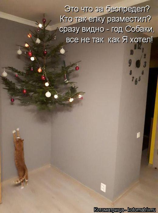 Котоматрица: Это что за беспредел? Кто так елку разместил? сразу видно - год Собаки, все не так  как Я хотел!