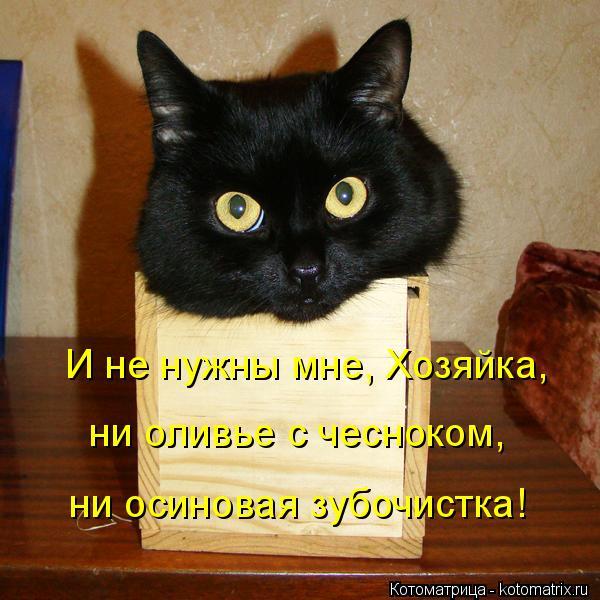 Котоматрица: И не нужны мне, Хозяйка, ни оливье с чесноком,  ни осиновая зубочистка!