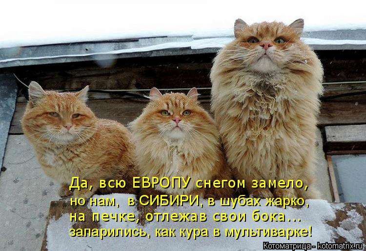 Котоматрица: Да, всю ЕВРОПУ снегом замело, но нам,  в СИБИРИ, в шубах жарко, на печке, отлежав свои бока... запарились, как кура в мультиварке!