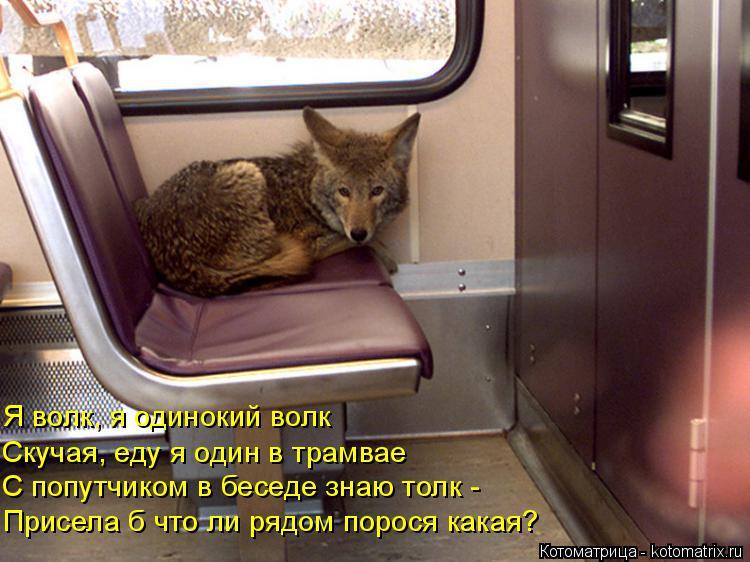 Котоматрица: Я волк, я одинокий волк Скучая, еду я один в трамвае   С попутчиком в беседе знаю толк - Присела б что ли рядом порося какая?