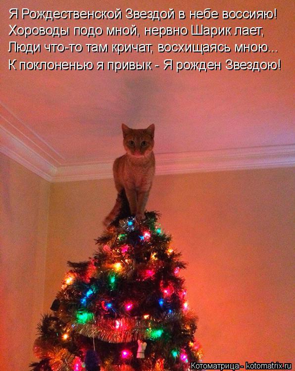 Котоматрица: Я Рождественской Звездой в небе воссияю! Хороводы подо мной, нервно Шарик лает, Люди что-то там кричат, восхищаясь мною... К поклоненью я прив