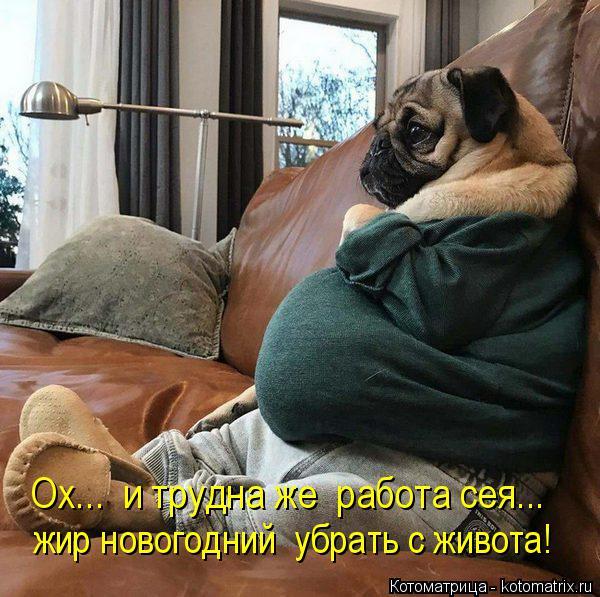 Котоматрица: Ох...  и трудна же  работа сея... жир новогодний  убрать с живота!