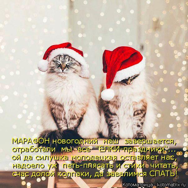 """Котоматрица: МАРАФОН новогодний  наш  завершается, отработали  мы  все  """"ЁЛКИ-праздники""""... ой да силушка молодецкая оставляет нас, надоело уж  петь-плясать"""