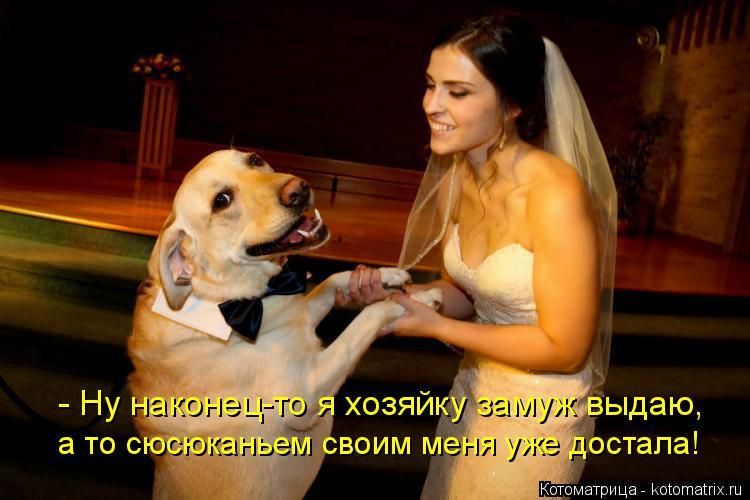 Котоматрица: - Ну наконец-то я хозяйку замуж выдаю, а то сюсюканьем своим меня уже достала!