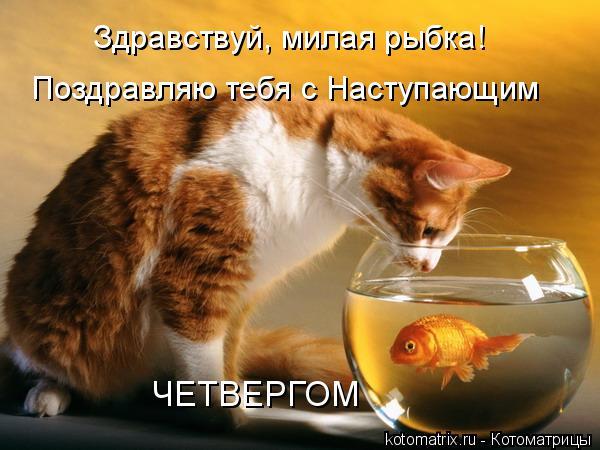 Котоматрица: Здравствуй, милая рыбка! Поздравляю тебя с Наступающим ЧЕТВЕРГОМ