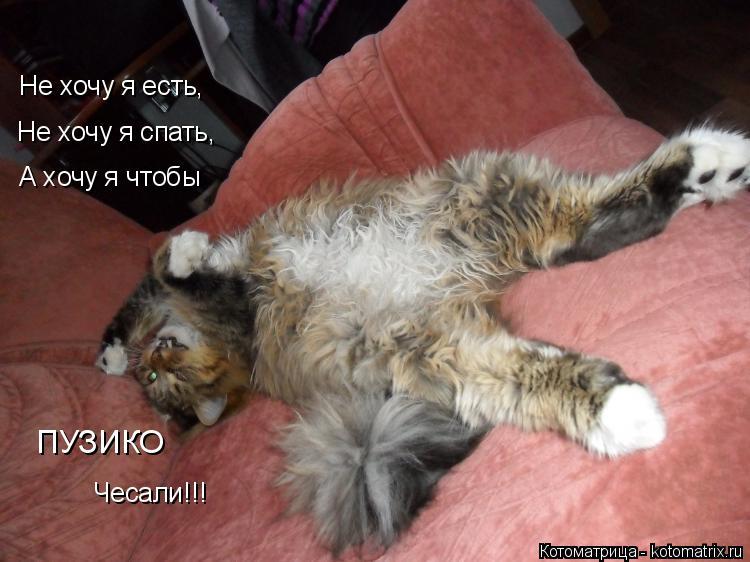 Котоматрица: Не хочу я есть,  Не хочу я спать,  А хочу я чтобы ПУЗИКО Чесали!!!